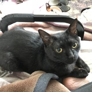 黒猫マーちゃん、落ち着いた大人猫
