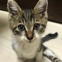 事故に遭った子猫名古屋から里親さん募集