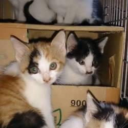 日光から里親募集の猫ちゃん6匹来ます。