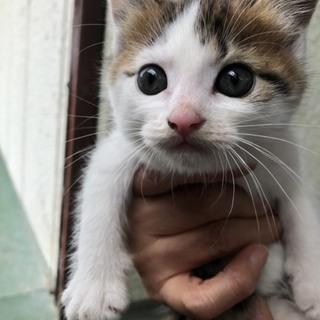 生後2ヶ月くらいの子猫です
