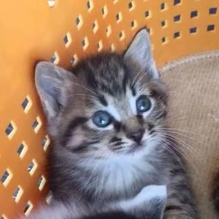 可愛い子猫♪キジ姉妹