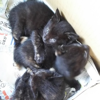 生後約2ヶ月の子猫を3匹保護しています。