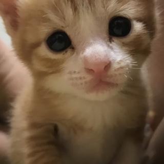 生後1ヶ月の甘えたスリゴロな子猫ちゃん