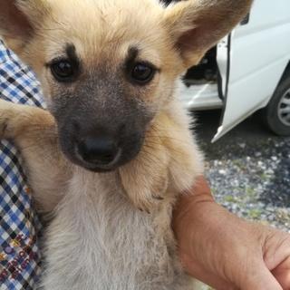 可愛い仔犬2