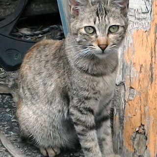 昨年の秋口に生まれたキジ猫ちゃん。