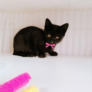 黒猫兄弟元気いっぱいの一匹