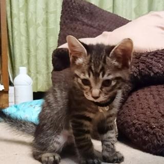 GWに生まれた子猫残り一匹になりました