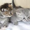 5月上旬生 子猫4匹