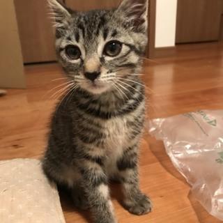 2か月 キジの美猫さん