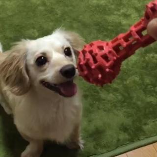 3歳のミックス犬。可愛がって頂けるならどなたでも。
