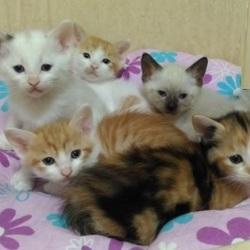 子猫だらけの譲渡会in猫カフェみーちゃ・みーちょ