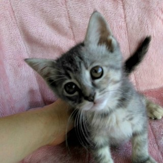 4姉妹の長女:仮名ココちゃん生後2ヶ月