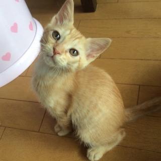 やんちゃで優しい茶トラの仔猫