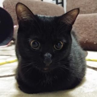 かまってちゃんの黒猫