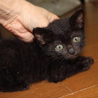 動画ありかわいい黒猫ことりちゃん離乳中