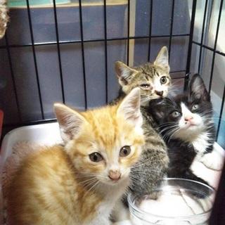 可愛い2か月の子猫たち