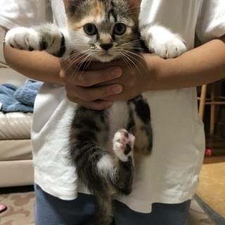 ちょっとお転婆な三毛猫ちゃん