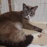 【至急】近畿圏で探しております。【猫+犬】