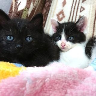 最高に面白い❤️黒猫モーリー