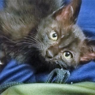 生後1ヶ月半 黒子猫♀