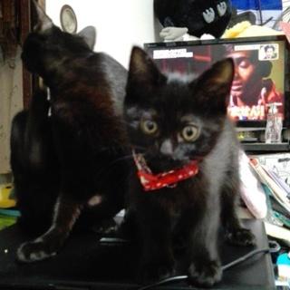 黒猫リリー生後3ヶ月