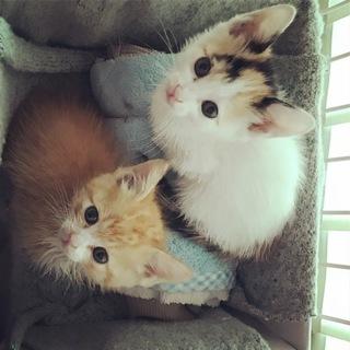 人が大好き!可愛い子猫2兄弟