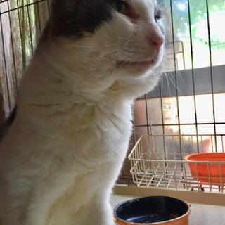 キャラ濃いめオラオラ系ブサカワお爺猫グレオくん!