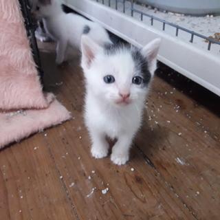 子猫 2月 オス