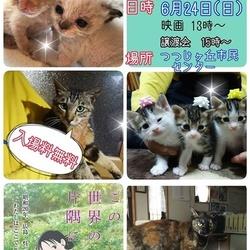 三重県名張市 猫の譲渡会&映画上映会(無料)