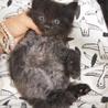長毛フワフワ黒猫の男の子。元気で遊ぶの大好き♪