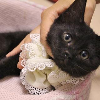 元気いっぱいな黒猫の女の子