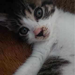 子猫② もずく君 オス