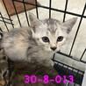 26日まで 子猫 4匹です