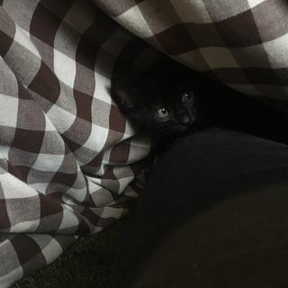 人懐っこい黒猫です。生後1ー2ヶ月