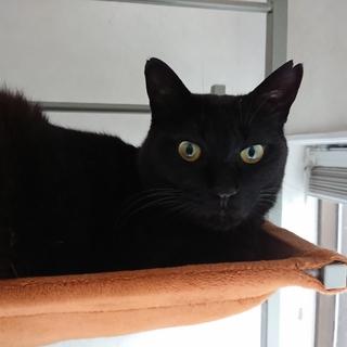 カッコいい黒猫