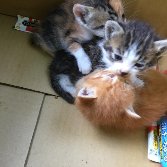 保護猫のカバー写真