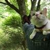 木の上で雨宿り