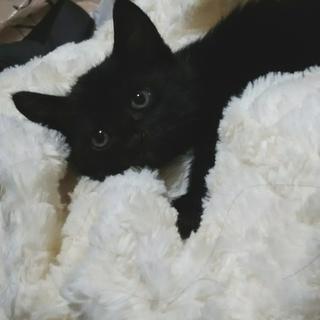 黒猫女の子二か月=^_^=