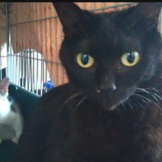 黒猫ファミリーのお母さんです♪