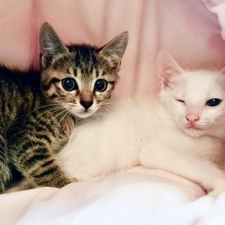 6週間 美猫兄妹