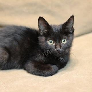 優しい黒猫ルナくん