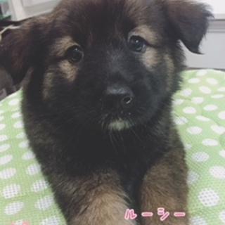 保護ナンバーD1268ミックス子犬