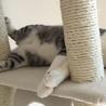 先住猫と新入り子猫の体格差