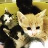 つぶらな瞳かわいい仔猫4匹 4週目