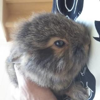 ウサギの里親募集してます