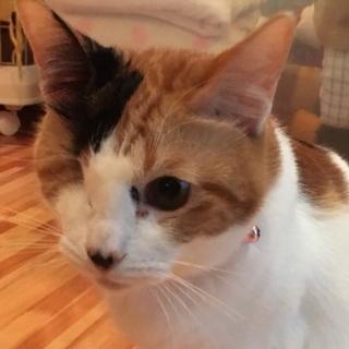 7/1銀座★ミミちゃん★ハンデを感じさせない美人猫