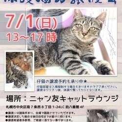 【札幌】保護猫の譲渡会
