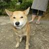 人懐こいまだ子犬です!助けて下さい。
