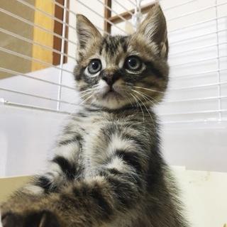人間だ~いすき!猫も大好き!甘えん坊キジくん