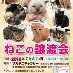 猫の譲渡会@京都
